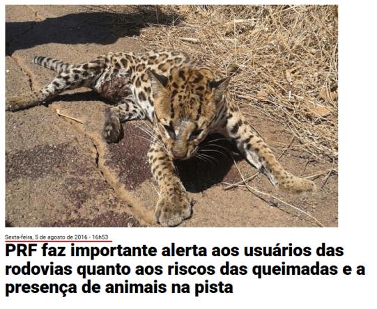 Checamos! Para criticar suposto descaso com a Amazônia, celebridades e líderes políticos publicam imagens antigas 31