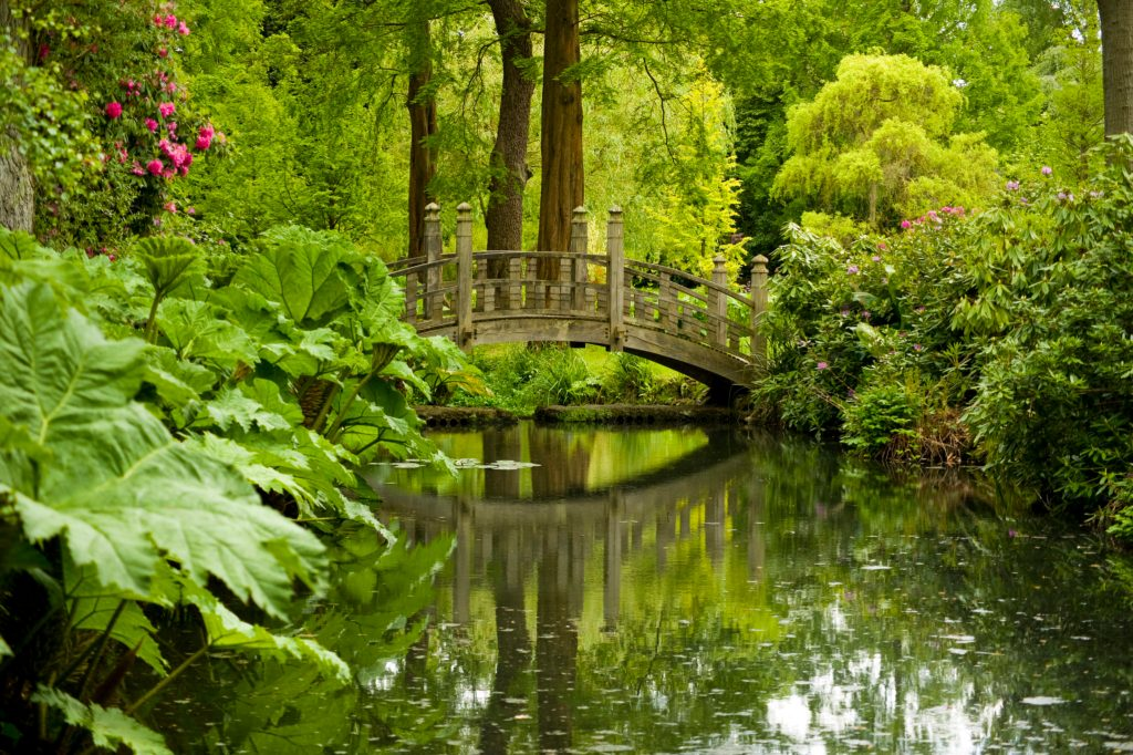 View of a bridge in Winterbourne's woodland walk garden