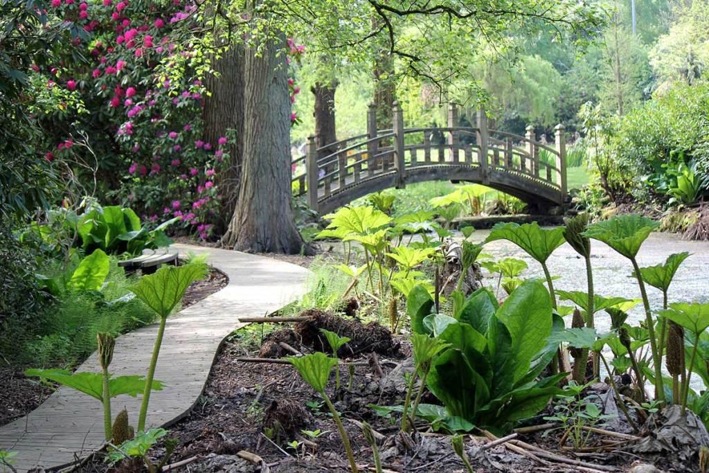 Winterbourne's woodland walk garden