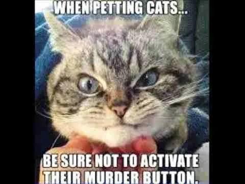 mean cat not activate murder button