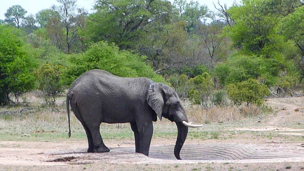 Elephant South African Safari