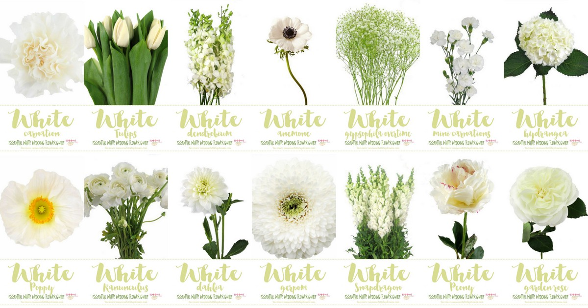 White Wedding Flowers Guide: Types Of White Flowers, Names