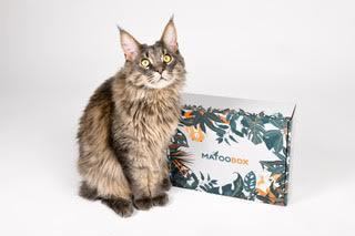 Quelle box choisir pour son chat ? Le guide comparatif des box pour animaux