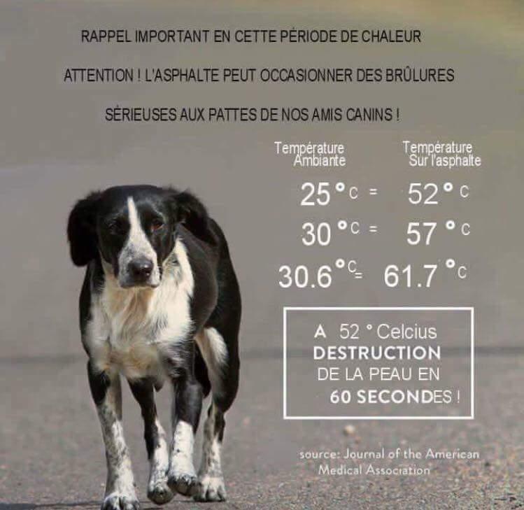 comment rafraichir son animal en été? quelles astuces et conseils pour protéger son animal de la canicule? quelles sont les erreurs à éviter pendant les grandes chaleurs? comment aider son animal à supporter la chaleur?
