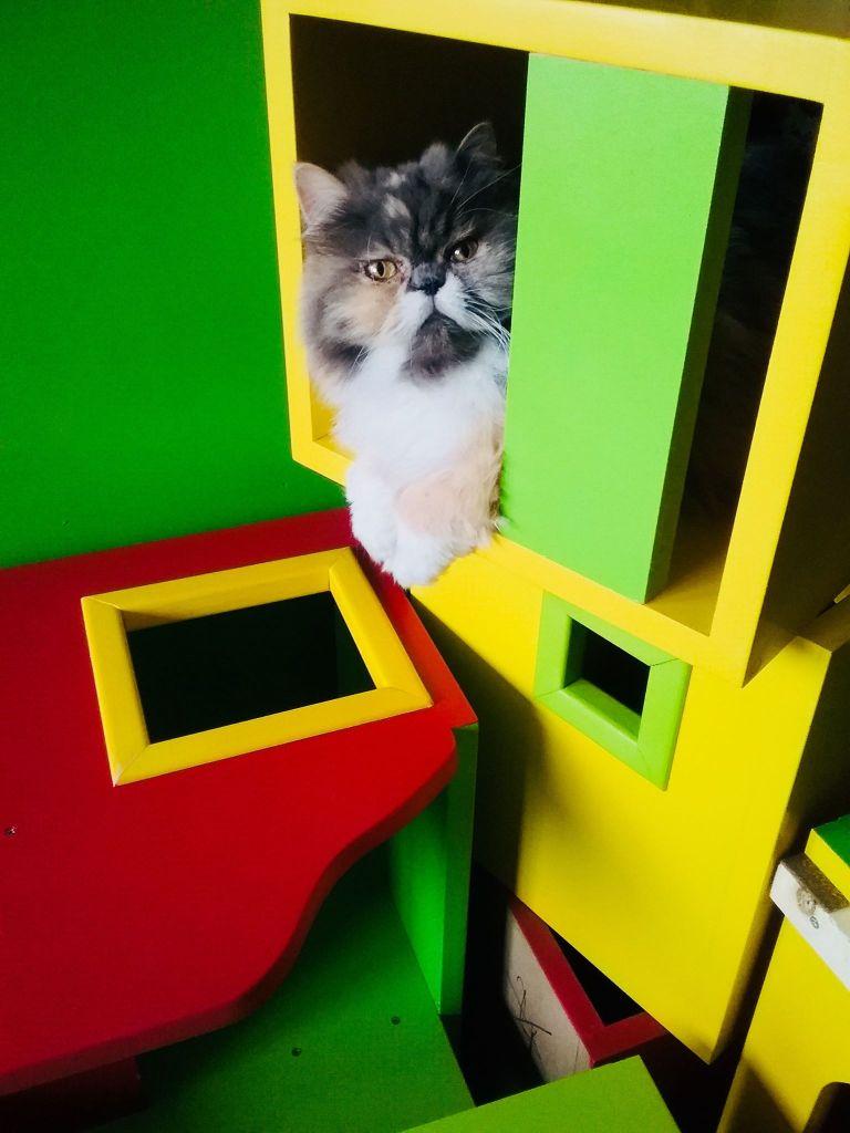 interview de Gégène the cat - avis de la super souris souribambelle, jouet artisanal