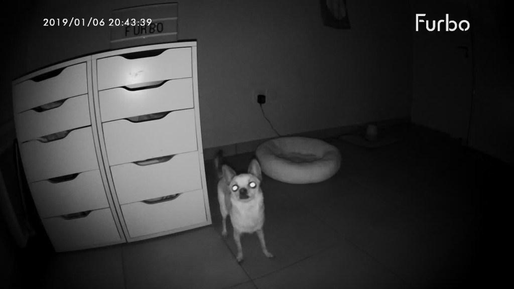 Comment surveiller son chien? La caméra intelligente Furbo est elle comme on le dit aussi formidable?  Ce que l'on vous cache sur la caméra de surveillance Furbo. L'avis d'un expert en relation homme animal sur la Furbo.