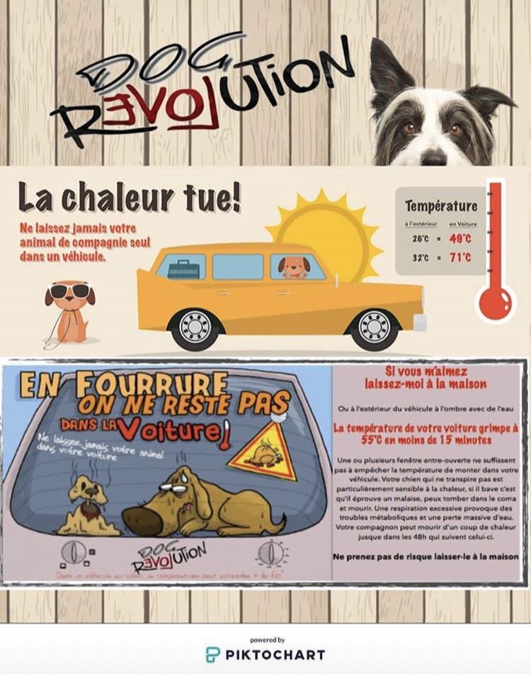 Protéger son chien en été - conseils et informations utiles pour un été plus frais pour votre chien même sans clim
