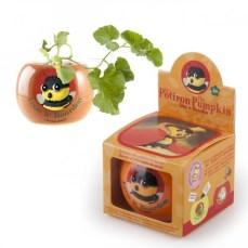 leon-le-bourdon-graines-de-potiron-en-pot-de-culture-ceramique