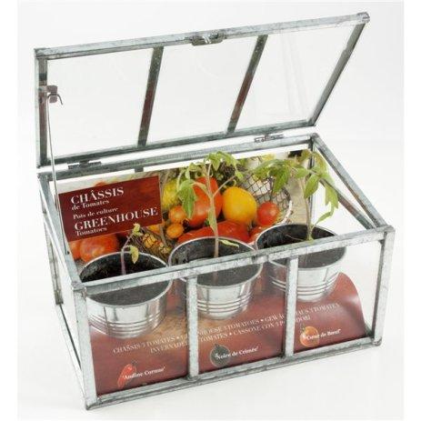 serre-chassis-plantation-de-tomates-anciennes