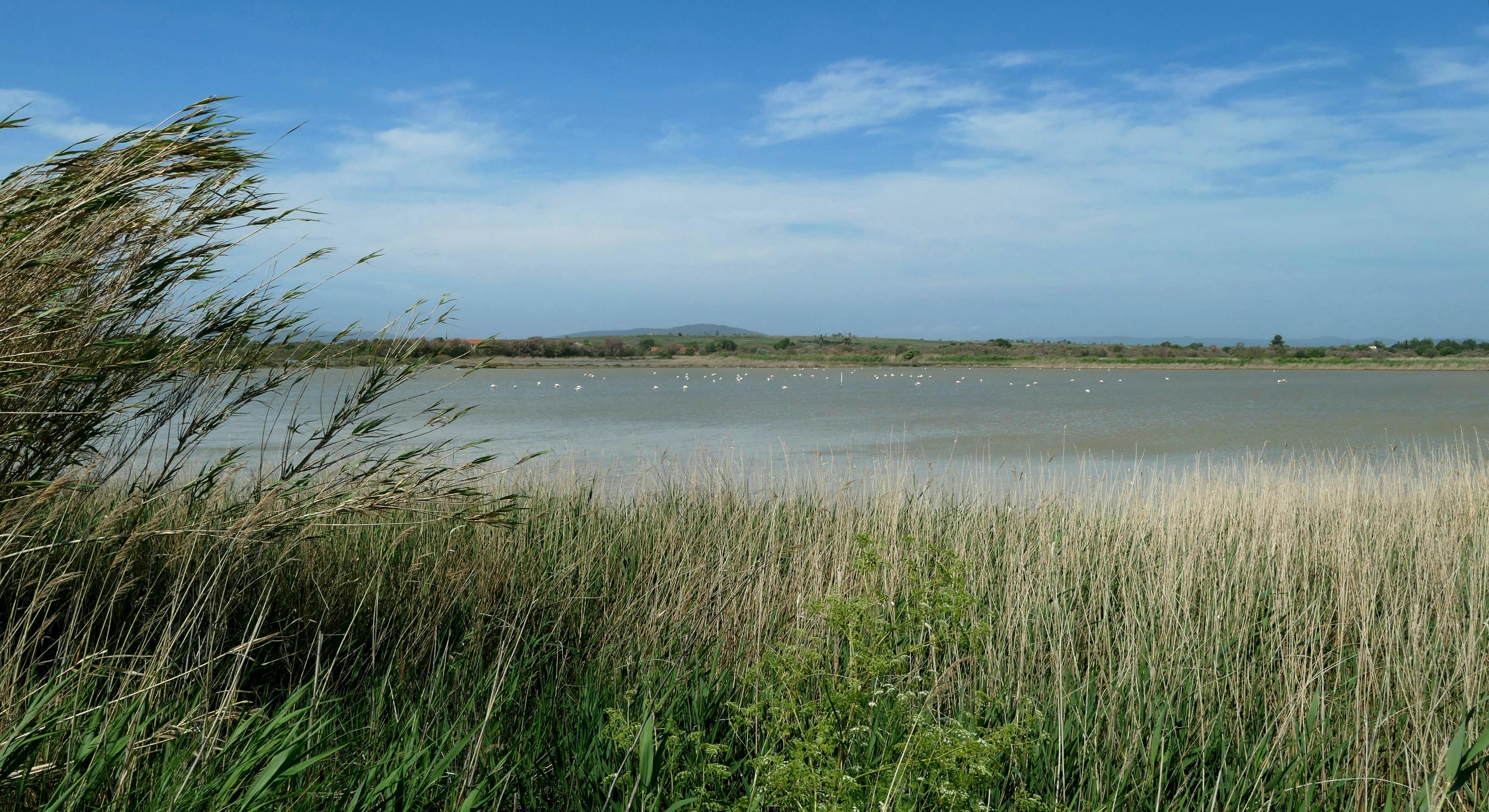 L'étang du Méjean