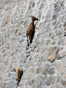 goats-dam-side-view_28151_600x450
