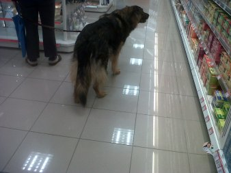 Dog in a shop