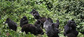 16-days-uganda-safari