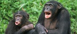 bonobos-stanley-grand-circuit