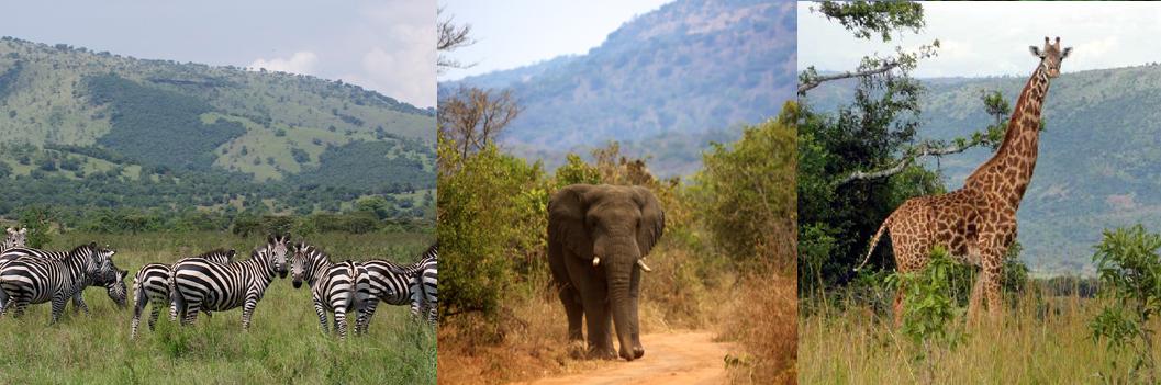akagera-np-rwanda