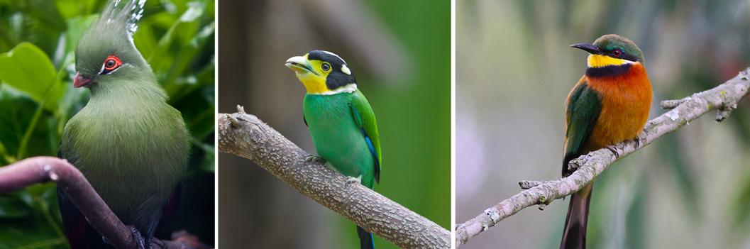 birds-in-bwindi