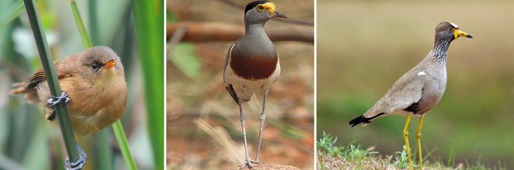 birds-lake-mburo