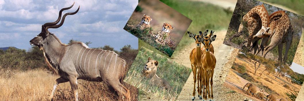wildlife-at-kidepo-np