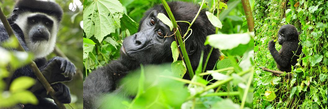 wildlife_bwindi_np