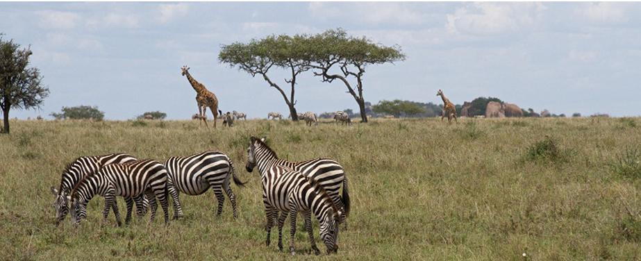 akagera-national-park-wildlife