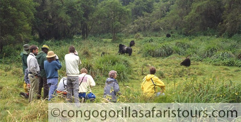 2 days Congo gorilla safari Kahuzi Biega National Park