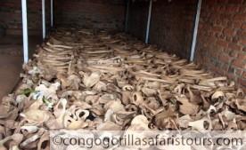 3 days Congo gorilla safari Virunga National Park