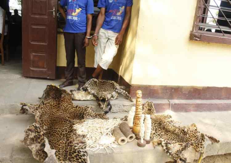 2 présumés trafiquants RD Congolais des produits de la faune arrêtés à Brazzaville