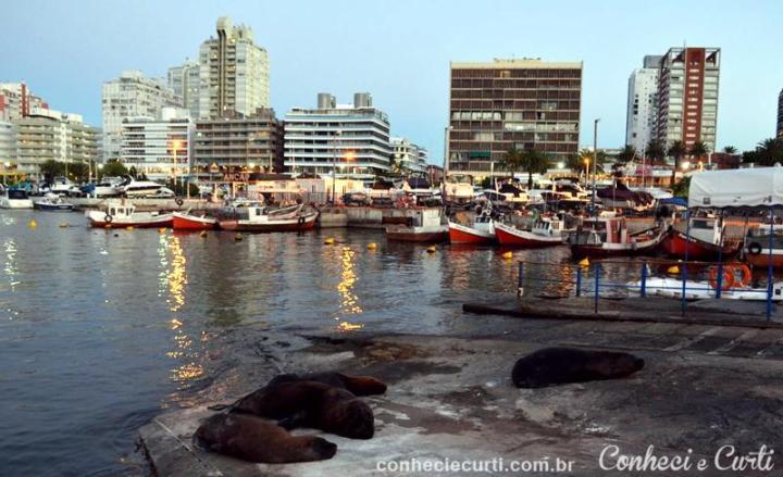 Punta del Este, o leões marinhos.
