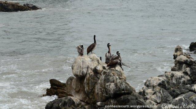 Em Viña del Mar - Chile
