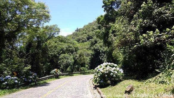 Estrada da Graciosa, a pavimentação com paralelepípedos e as hortênsias.