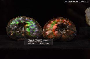 Museu de História Natural de Viena. Aragonite do Canadá.