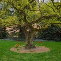Árvore no castelo de Schwerin