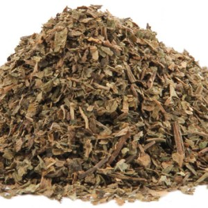 Indian Tobacco, Lobelia inflata at Conjure Work, sorcery supplies services, witchcraft Hoodoo products high magick