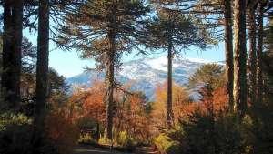 Parque Nacional Conguillio - Chile - Foto: Archivo fotográfico CONAF
