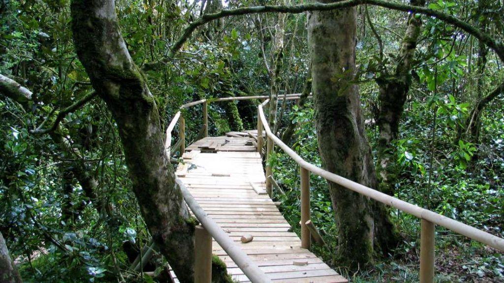 Parque Nacional Bosque Fray Jorge - Chile - Foto: Archivo fotográfico CONAF