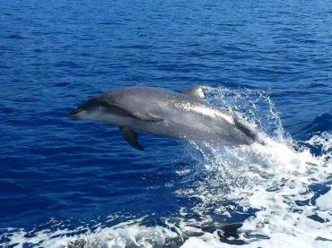 Excursión para ver delfines y ballenas en Tenerife – Los Gigantes