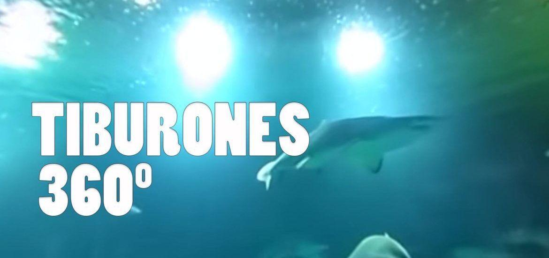 Tiburones Oceanografic 306