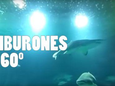 Visita al acuario de tiburones del Oceanografic de Valencia – Vídeo 360