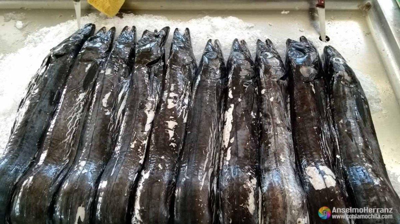 Pez Espada - Mercado dos Lavradores - Madeira