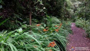 Plantas Junto Al Sendero - Levada Pico das Pedras - Madeira