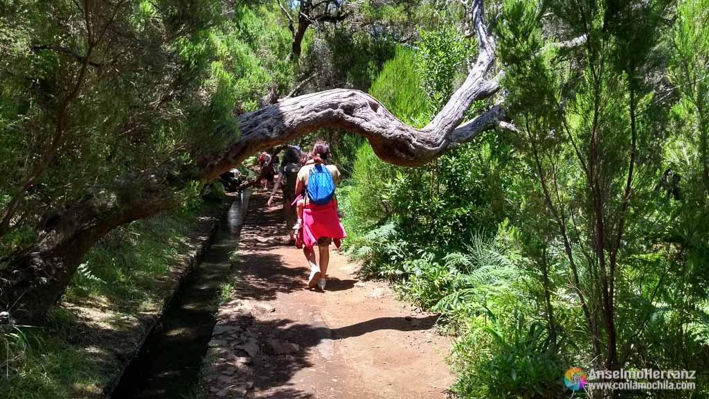 Camino de Regreso por la Levada 25 Fontes - Madeira