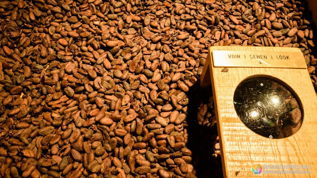 Fábrica de Chocolate Maison Cailler - Semillas de Cacao