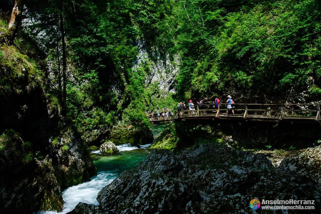 Pasarelas y puentes que recorren la garganta de Vintgar - Eslovenia