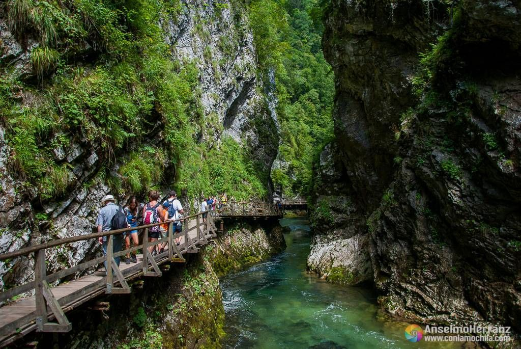 Pasarela de madera en la garganta de Vintgar - Eslovenia