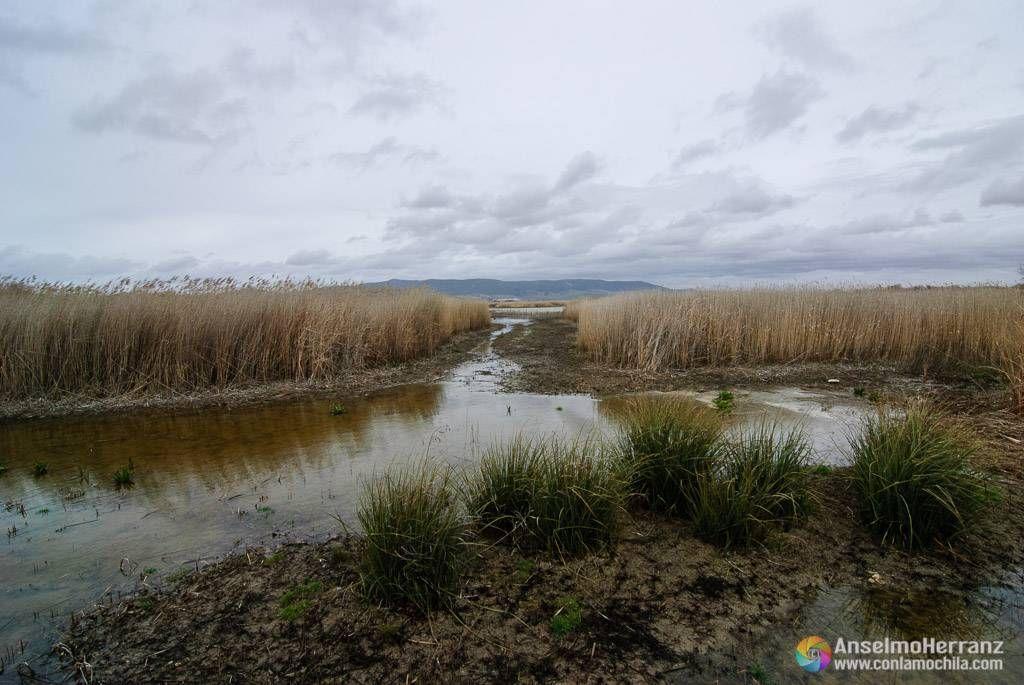 Lagunas de las Tablas de Daimiel - Ciudad Real