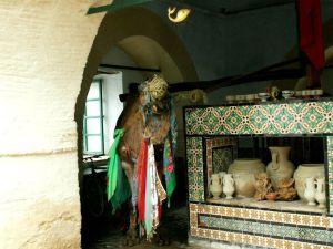 Camello de Bir Barrouta - Kairouan - Túnez