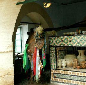 Bir Barrouta – El camello y la noria de Kairouan o Kairuán