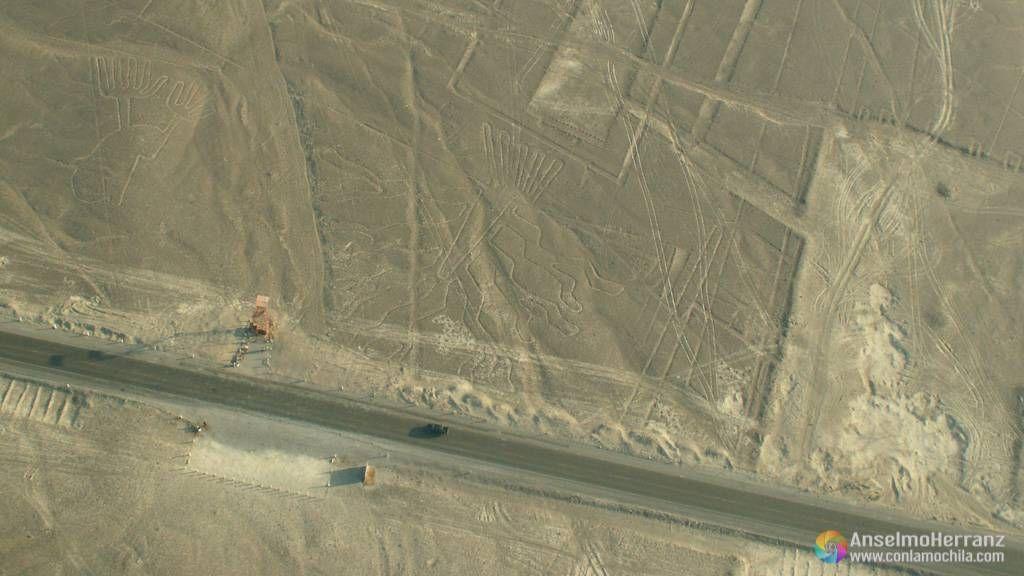 Árboles y carretera panamericana - Líneas de Nazca - Perú