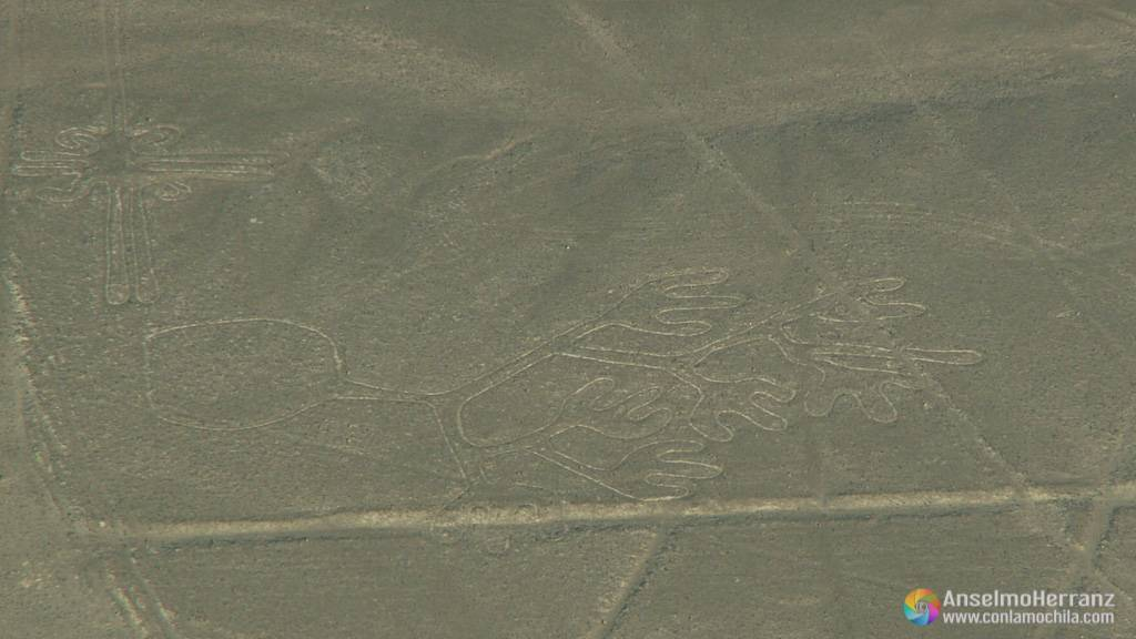 Alga marina - Líneas de Nazca - Perú