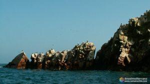 Aves sobre las rocas - Islas Ballestas - Perú